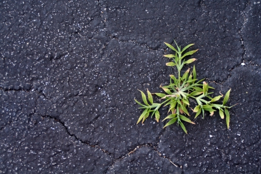 Plant growing in cracked asphalt - vitality symbol