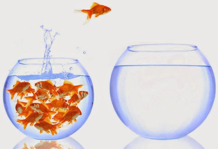 You Need A Bigger Fish Tank The Dead Drop