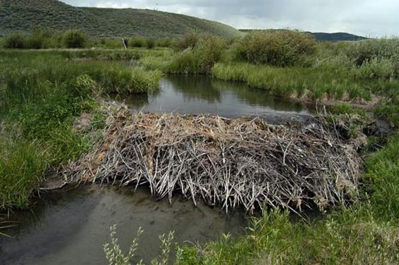 081009-beaver-dam-02