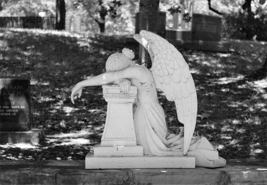 glenwood-angel-grieves-bw